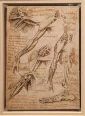 LDV_anatomy